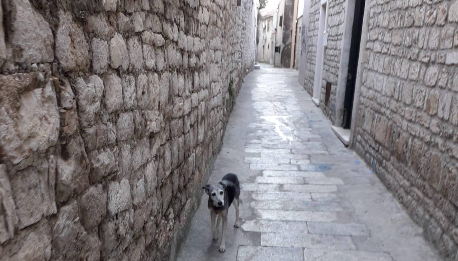 Problem pasjeg izmeta kao da se samo povećava?